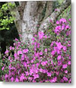 Azaleas With Tree Metal Print