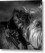 B And W Dog Metal Print