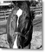 B And W Horse Headshot Metal Print