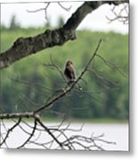 Kejimkujik National Park - Bird Metal Print
