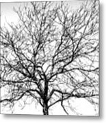 B/w Tree #1 Metal Print