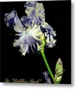 Babbling Brook Iris  Metal Print