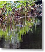 Babcock Wilderness Ranch - Alligator Den Metal Print