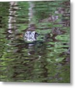 Babcock Wilderness Ranch - Alligator Lake - Heads Up Metal Print