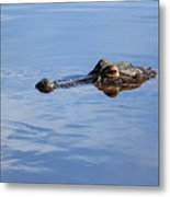 Babcock Wilderness Ranch - Alligator Lake - Waiting For Prey Metal Print