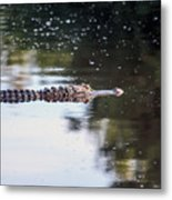 Babcock Wilderness Ranch - Alligator Long Profile Metal Print