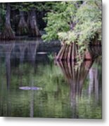 Babcock Wilderness Ranch - Peaceful Alligator Lake Metal Print