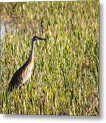 Babcock Wilderness Ranch - Sandhill Crane Metal Print