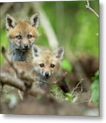 Babes In The Woods Metal Print