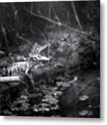 Baby Alligator Vs Mud Wasp Metal Print