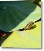 Baby Baja Tree Frog Emerges From Lotus Leaf Metal Print