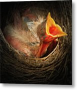 Baby Bird In The Nest With Mouth Open Metal Print