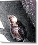 Baby Bird - Toyoung To Fly Metal Print