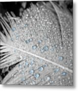 Baby Blue Dew Drops On Feather Metal Print