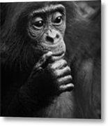 Baby Bonobo Metal Print