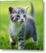 Baby Cat Metal Print