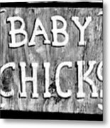 Baby Chicks Bw Metal Print