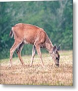 Baby Deer Walking On Grass By Forest Metal Print