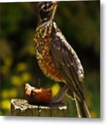 Infant American Robin Metal Print