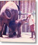 Baby Elephant At Zoo 1988 Metal Print
