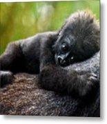 Baby Gorilla Metal Print