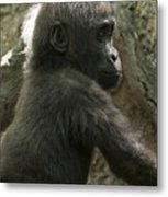 Baby Gorilla2 Metal Print