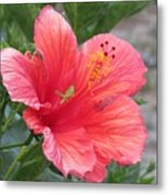 Baby Grasshopper On Hibiscus Flower Metal Print