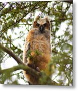 Baby Great Horned Owl Metal Print