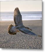Baby Gull At Dusk Metal Print
