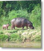 Baby Hippo 1 Metal Print