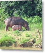 Baby Hippo 2 Metal Print