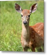 Baby In The Tall Grass Metal Print