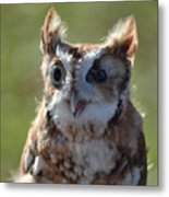 Cute Screetch Owl Metal Print