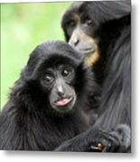 Baby Monkey And Mother Metal Print