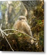 Baby Owl Sleeping Metal Print