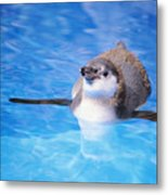 Baby Penguin Floating Metal Print