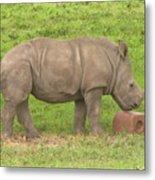 Baby Rhino Chilling Metal Print