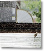 Baby Seagull Running In The Rain Metal Print