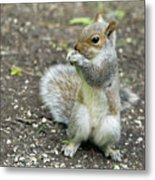 Baby Squirrel Metal Print