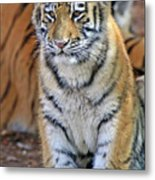 Baby Stripes Metal Print
