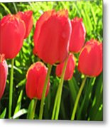 Back Lit Tulips 2 Metal Print