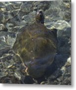 Back Of Turtle Metal Print