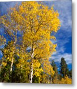 Back Road Beauty Metal Print