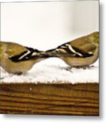 Back To Back American Gold Finches Metal Print