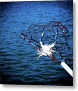 Back To The Bay Blue Crab Metal Print