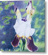 Back yard iris Metal Print
