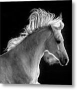 Backlit Arabian Metal Print