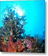 Backlit Coral Metal Print