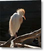Backlit Egret Metal Print