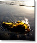Backlit Kelp Metal Print